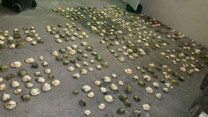 Confiscated abalone. Photo for illustration