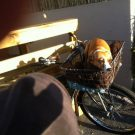 Cliffie taking the sun in Stephen's bike basket.