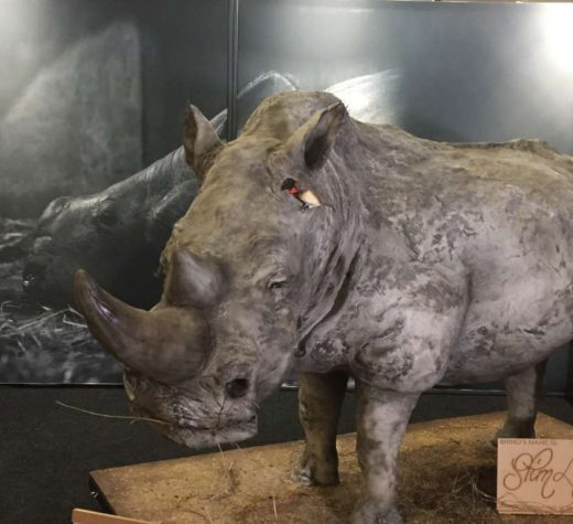 The world's largest rhino cake weighed 850 kg.
