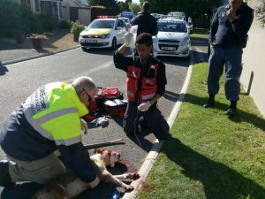 The pitbull was treated on the scene before being rushed to an animal hospital. Photo: SA Paramedic Services