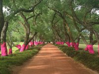 "Pink, the ""expression of new life."" Photo: Pink Trees for Pauline"