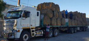 'n Skenking van voer. Foto: Agri Wes-Kaap