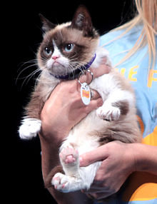 Pocket Rocket: Grumpy Cat. Photo: Wikipedia