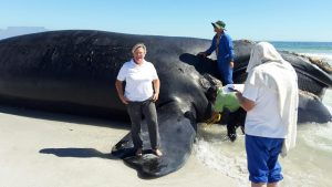 Councillor Nora Grose with the whale carcass. Photos: Provided