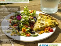 4 Better-Health Quiche