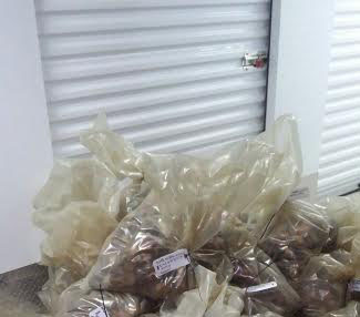 Some of the abalone found inside the storage unit in Table View.