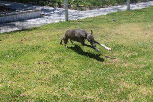 Happy hound!