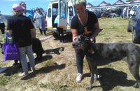 Wagging Tails at the Dog Show
